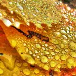 yellow leaves with water drops