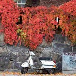 moped by stone wall red leaves