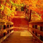 fall walkway