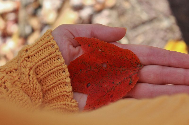 red-leaf-in-hand