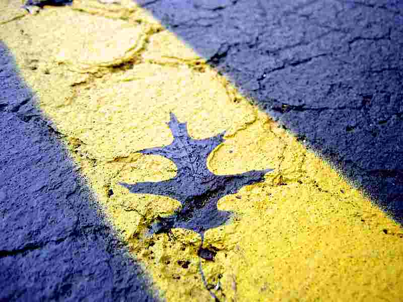 leaf imprint on yellow road line