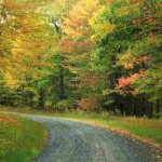 colorful fall road