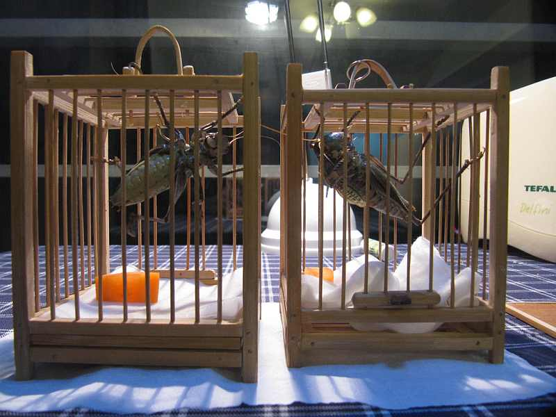 9-crickets-on-a-cage