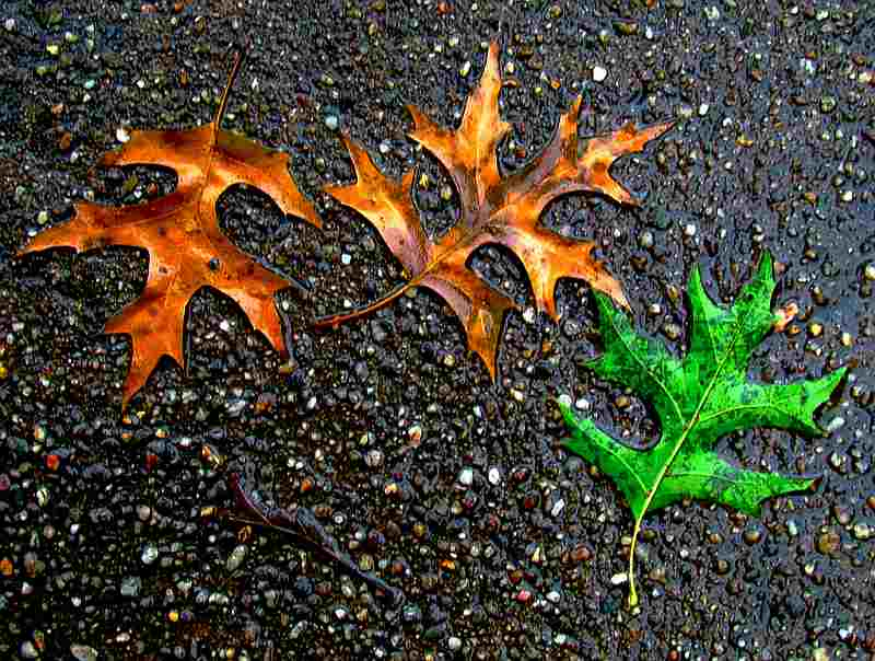 brown green leaves on wet street