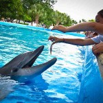 child feeding dolphin in tank