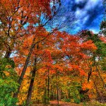 colorful fall forest