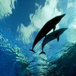 dolphins underneath pov
