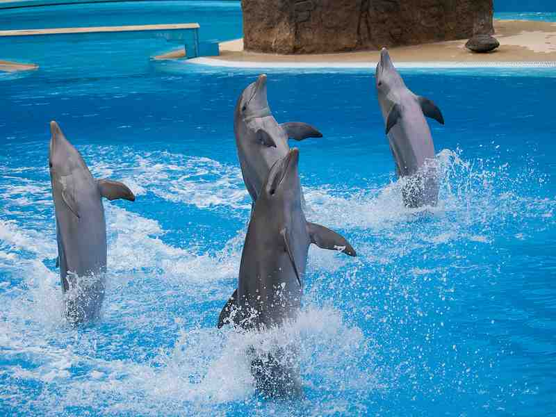four dolphins dancing