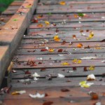 leaves on bridge