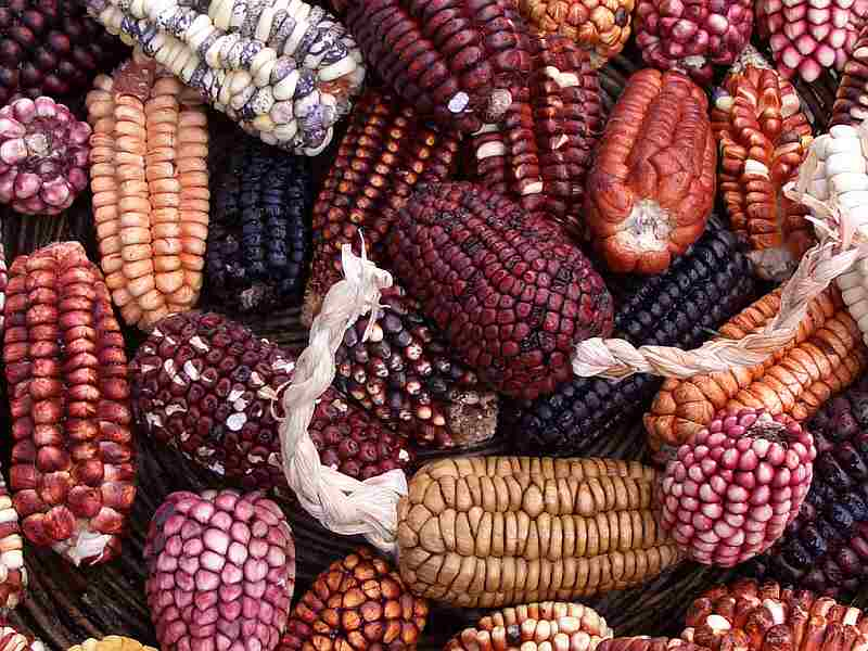 A huge variety of corn is grown in Peru