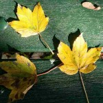 yellow leaves on green bench
