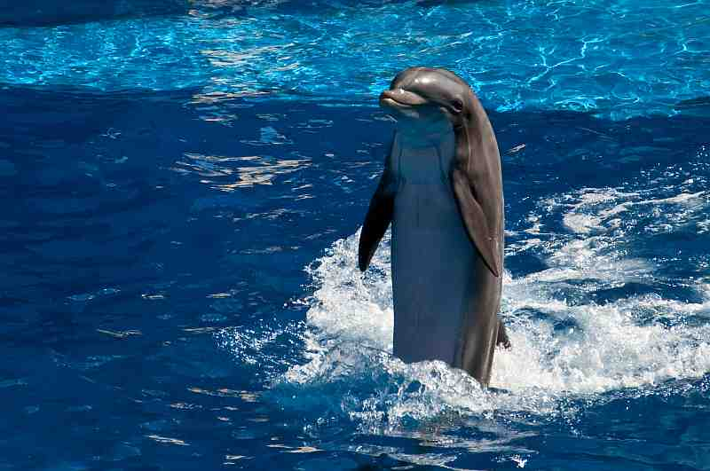 dolphin standing in water