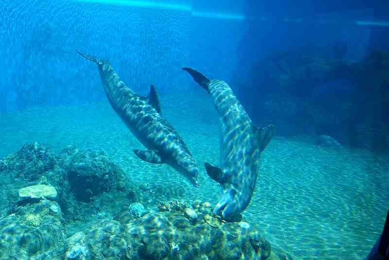 dolphins under water eating