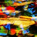 colorful leaves under water