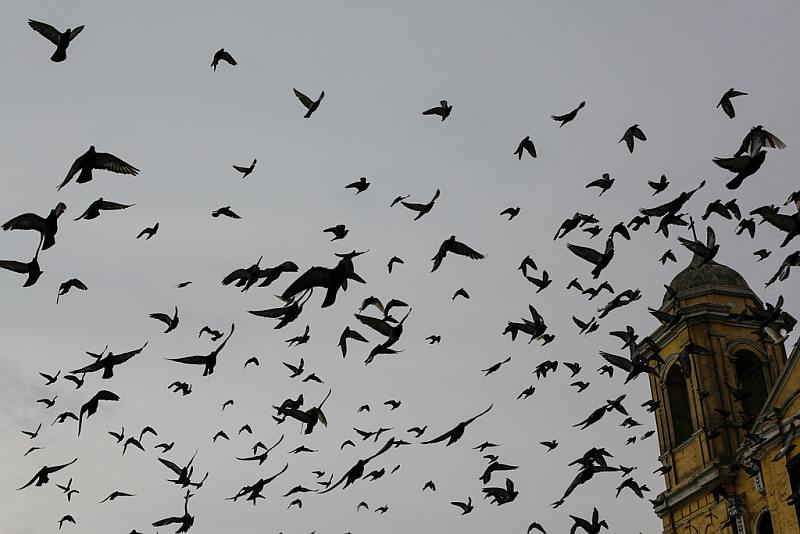The Birds, Lima Downtown
